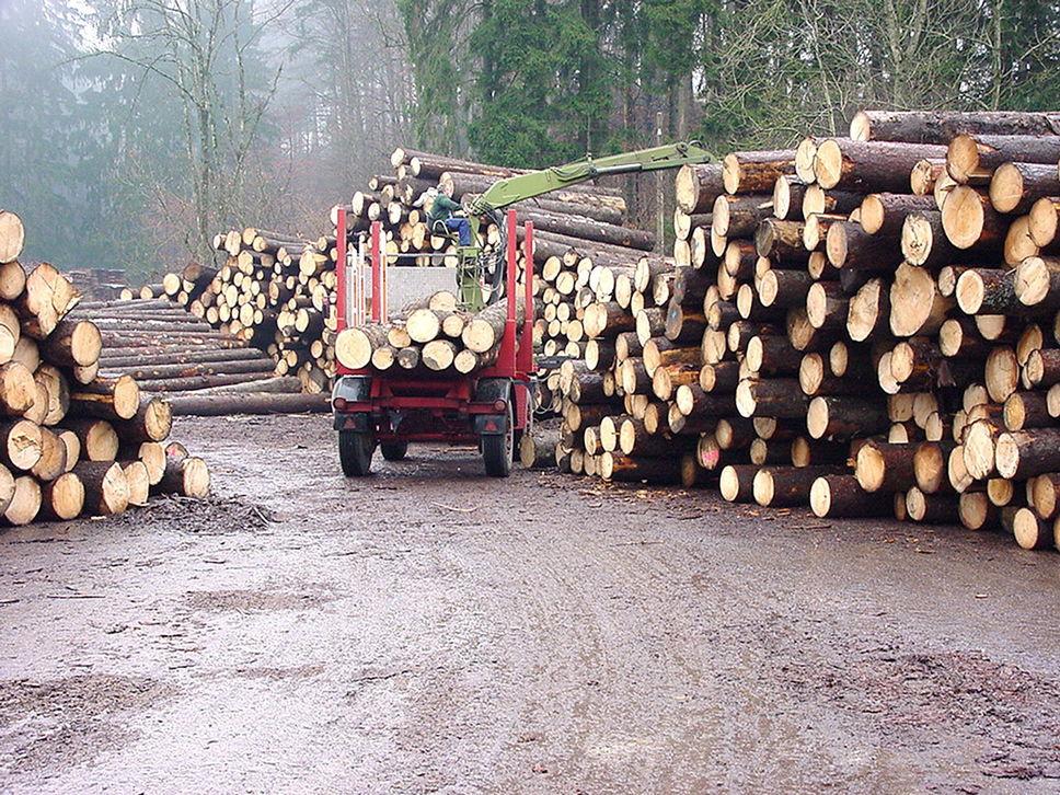 Les prix du bois d'oeuvre explosent , le prix du bois stagne